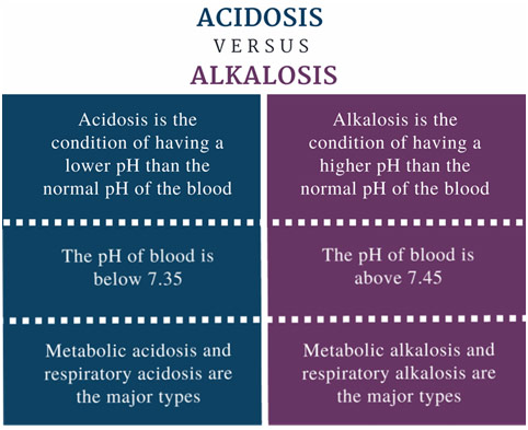 HMX Physiology: Acids and Bases